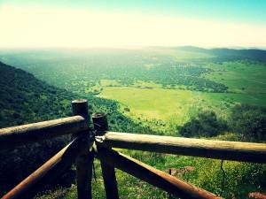 Región de Los Llanos de Olivenza